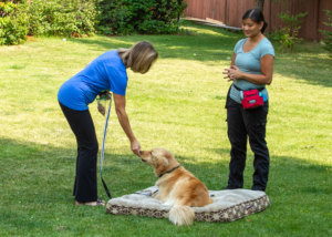 Calgary Dog Training