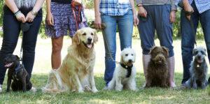 Northwest Calgary Dog Training