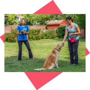 private dog training in calgary